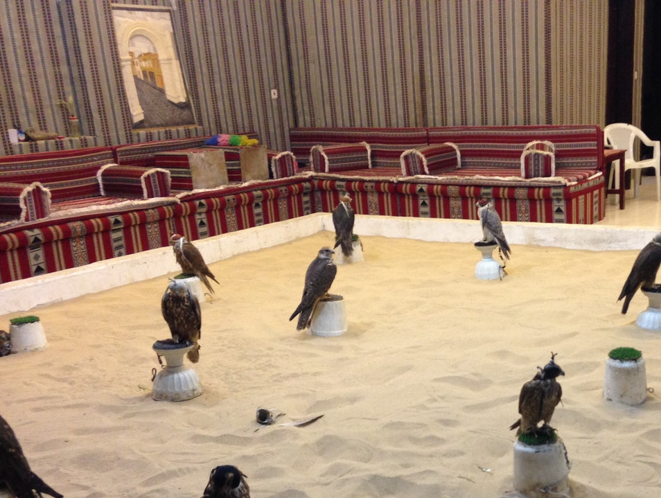 A Place to Watch a Falcon Auction
