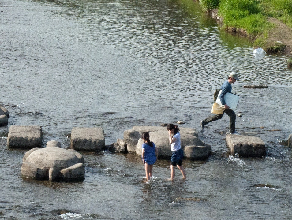 Turtle-hopping across the Kamo River Kyoto  Japan