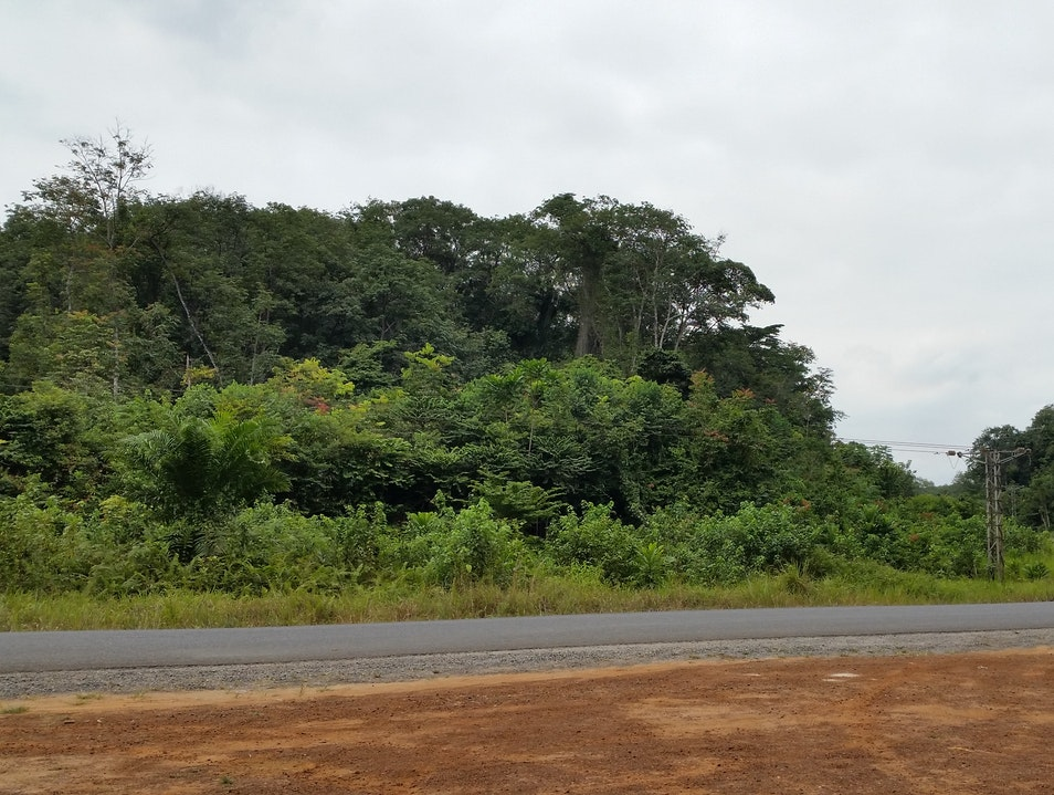 Easy nature walks close to the city Libreville  Gabon