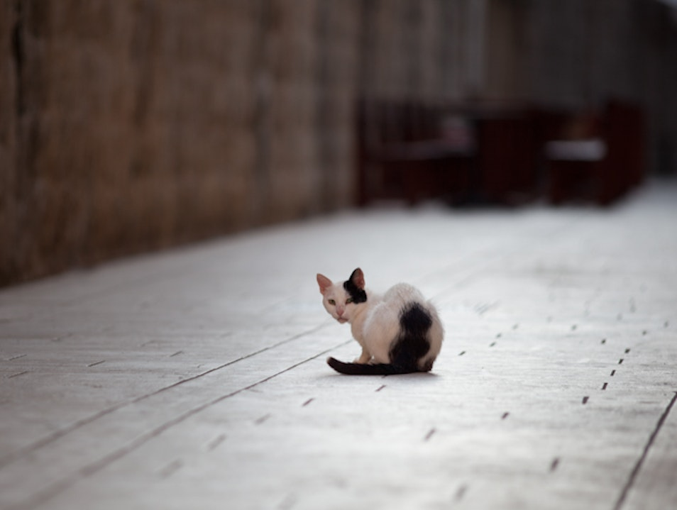 Photograph the kitties of Old Town Dubrovnik
