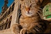The Cats That Rule Istanbul Istanbul  Turkey