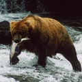 Katmai National Park King Salmon Alaska United States