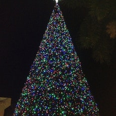 Delray Beach Xmass Tree