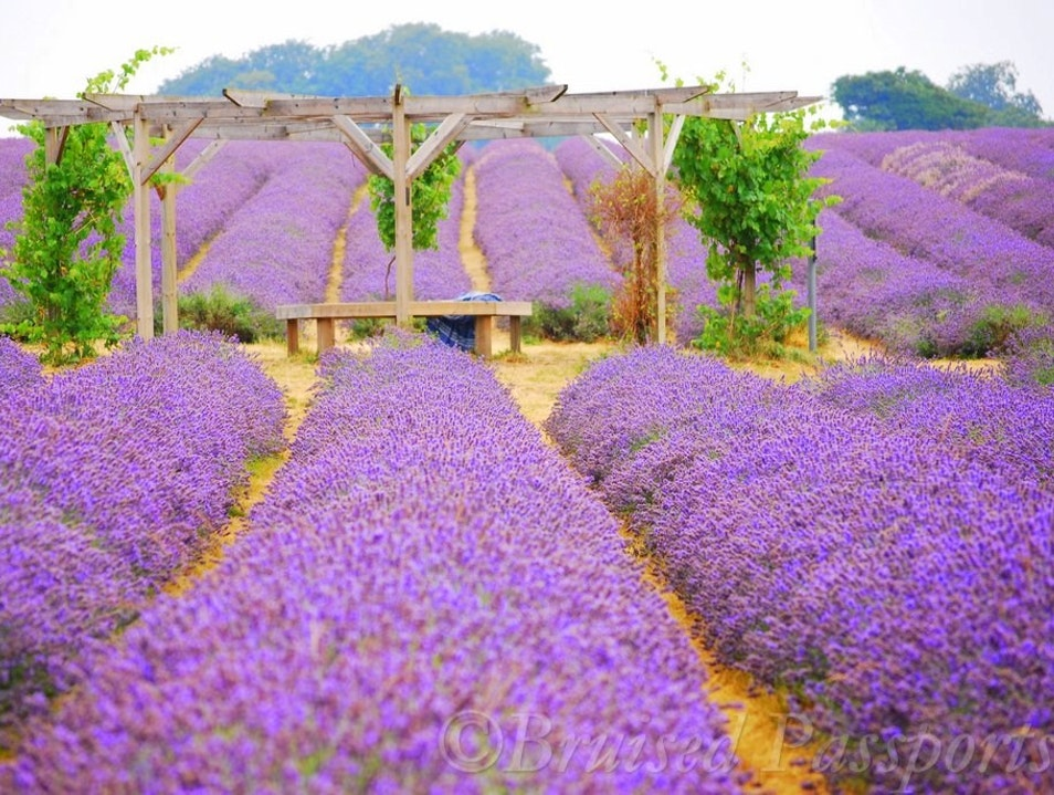 A taste of Provence in London Banstead  United Kingdom