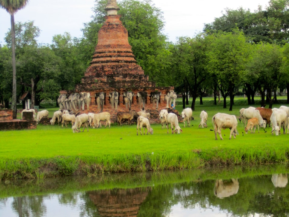 Cows and Elephants of Sukhothai