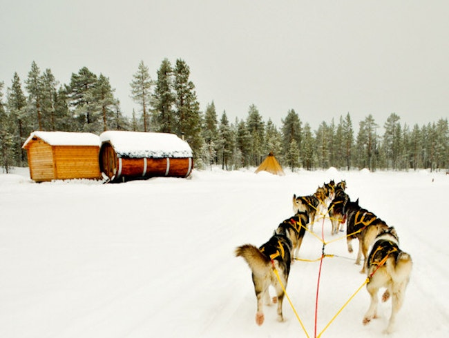 Going the Husky Route in Swedish Lapland