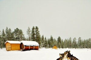 Top Outdoor Experiences in Swedish Lapland