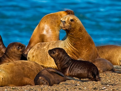 Wildlife in the Strait of Magellan Punta Arenas  Chile