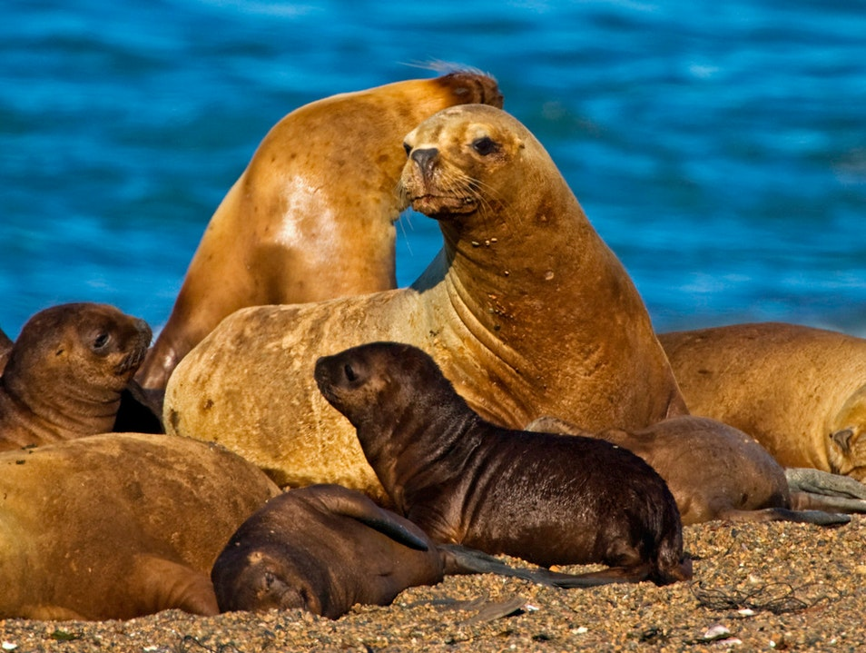Wildlife in the Strait of Magellan