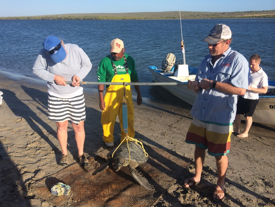 Sea Turtle Conservation With RED Sustainable Travel Comondú Municipality  Mexico
