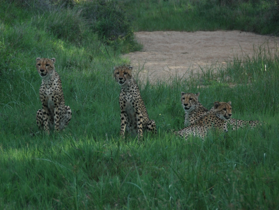 Family of Four Kruger Park  South Africa