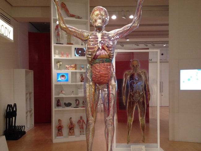 Anatomy Lessons at the Wellcome Trust
