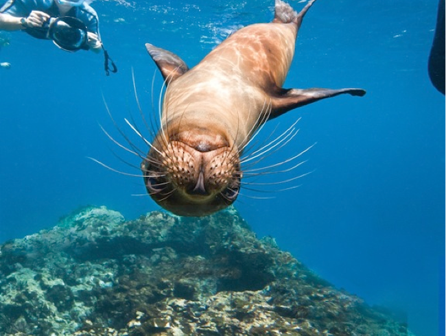 Playtime with Galápagos Sea Lions