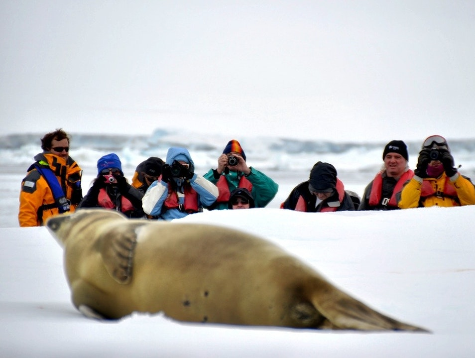 Eye to Eye with Seals   Antarctica