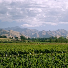 Wineries of Marlborough