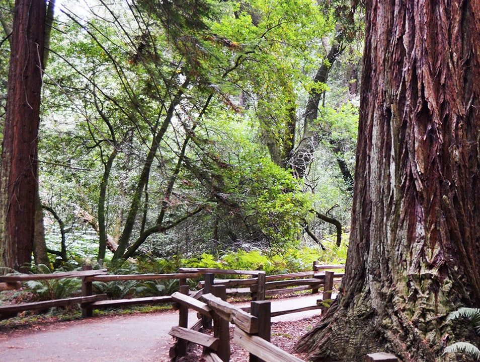 Muir Woods National Monument Mill Valley California United States