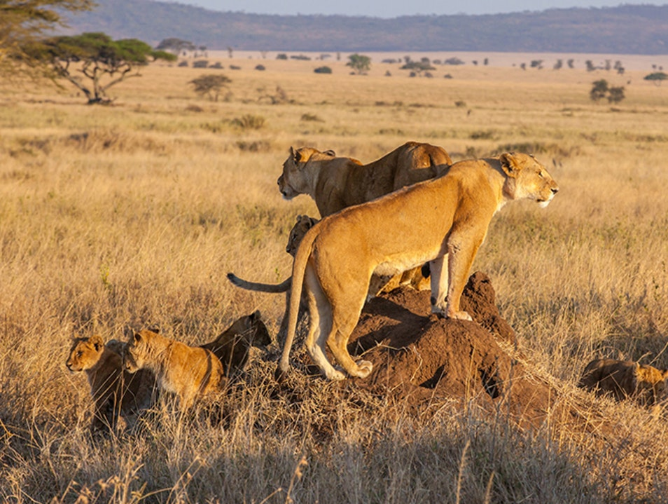 Catch the Migration in the Serengeti National Park Serengeti  Tanzania