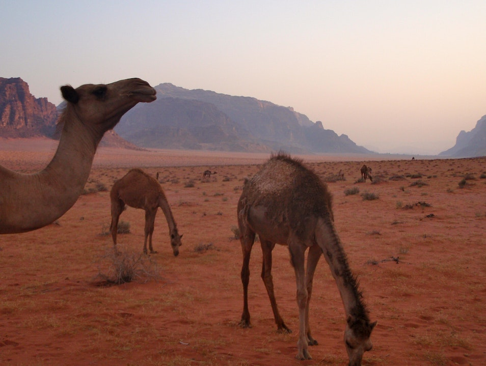 In Lawrence of Arabia's Footsteps