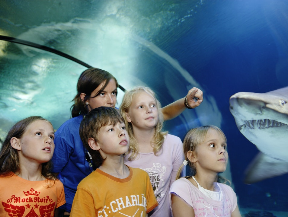 Rain Forests and Sharks in Gothenburg