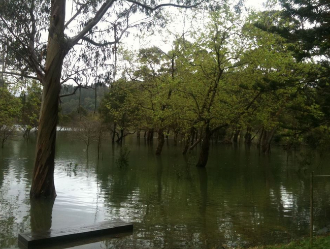 Water embraces the trees in Furnas Lake, Azores