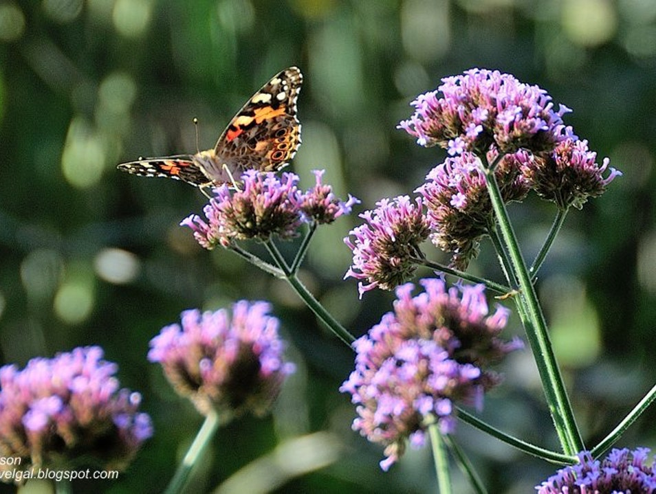 An Open Air Butterfly Garden Orono Minnesota United States