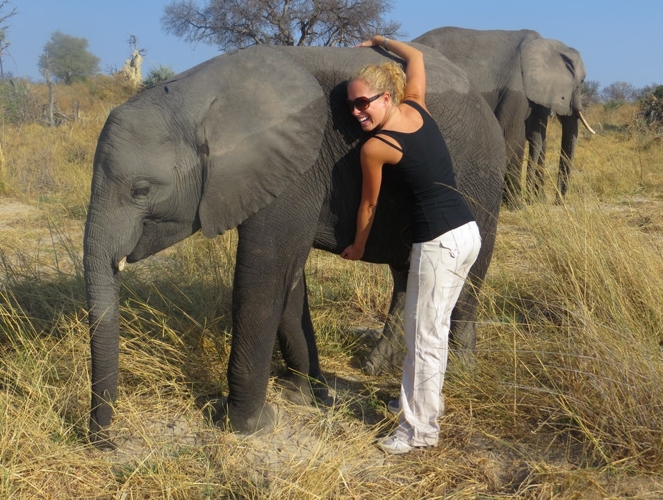 Life Lessons from an heroic African elephant Ngamiland East  Botswana