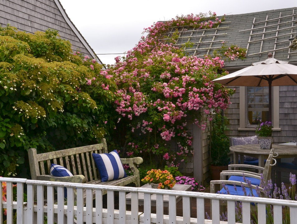 The Rose Covered Village of 'Sconset Nantucket Massachusetts United States