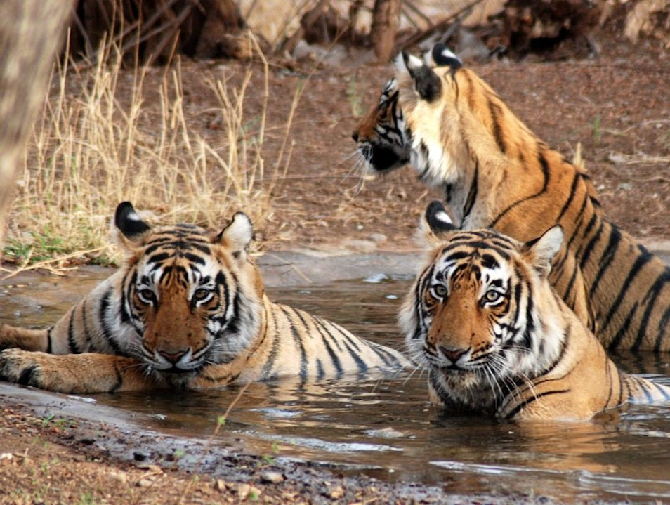 Rajasthan Tour With Royal Experience  Jaipur  India
