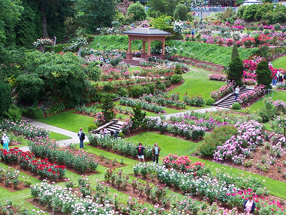 International Rose Test Garden Portland Oregon United States