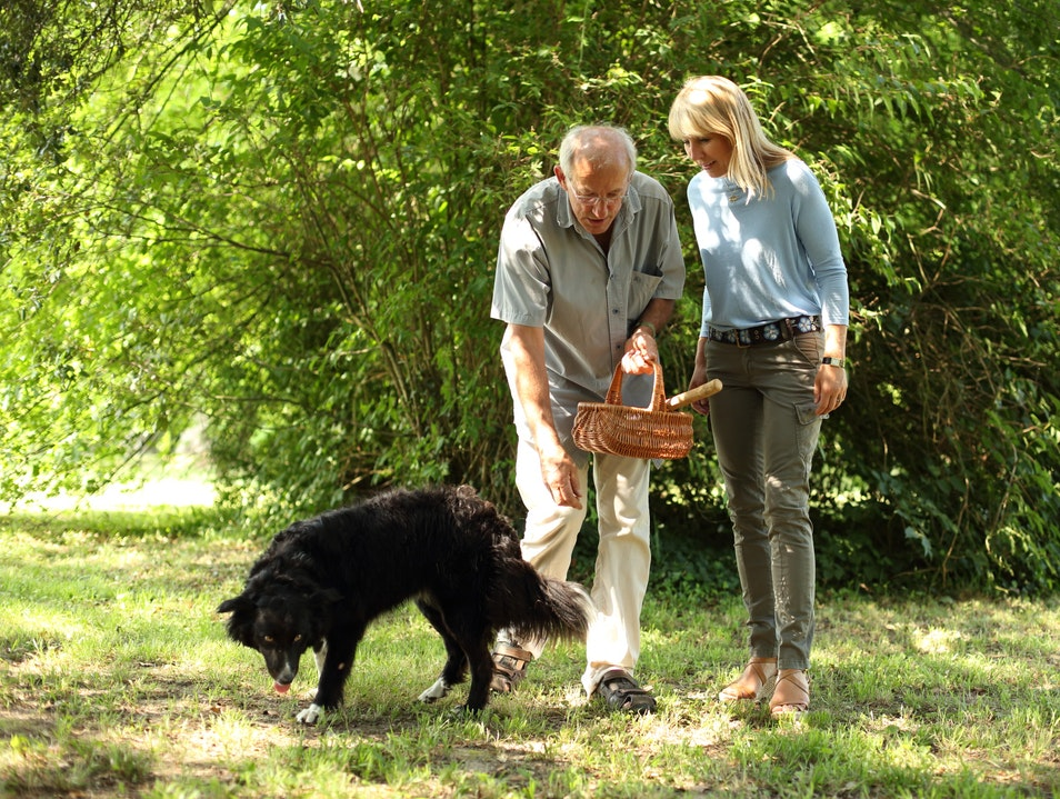 Truffle hunt in Bordeaux, France  Les Eyzies-de-Tayac-Sireuil  France
