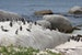 Watching Penguins at Boulders Beach