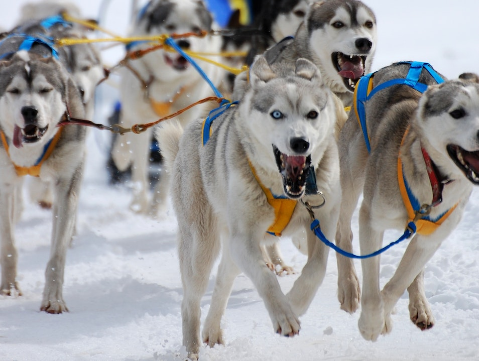 World Sled Dog Championship 2014 Kandersteg  Switzerland