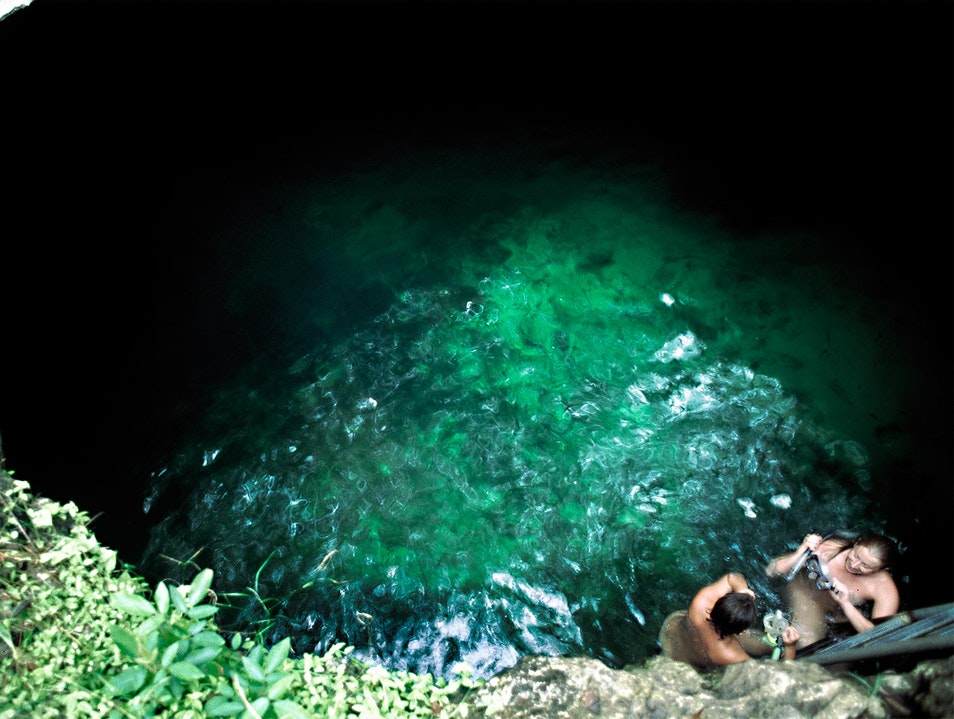 Drop from the Forest Floor into a Mexican Cenote