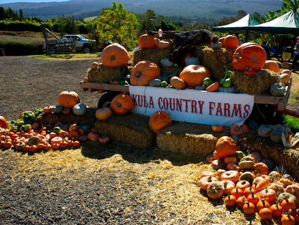 Kula Country Farm Kula Hawaii United States