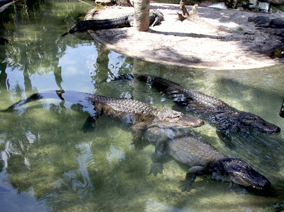 St. Augustine Alligator Farm Zoological Park St. Augustine Florida United States