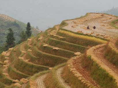 Longji Rice Terrace Scenic Spot Guilin  China