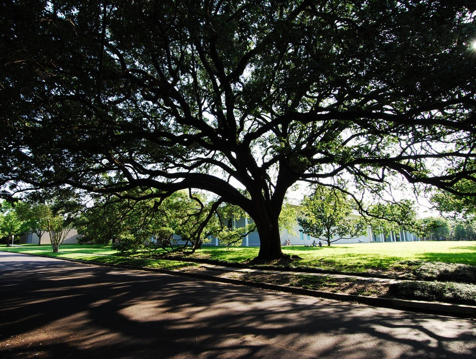 Have a Picnic at Menil Park Houston Texas United States