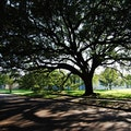 Menil Park Houston Texas United States