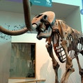 Florida Museum of Natural History Gainesville Florida United States