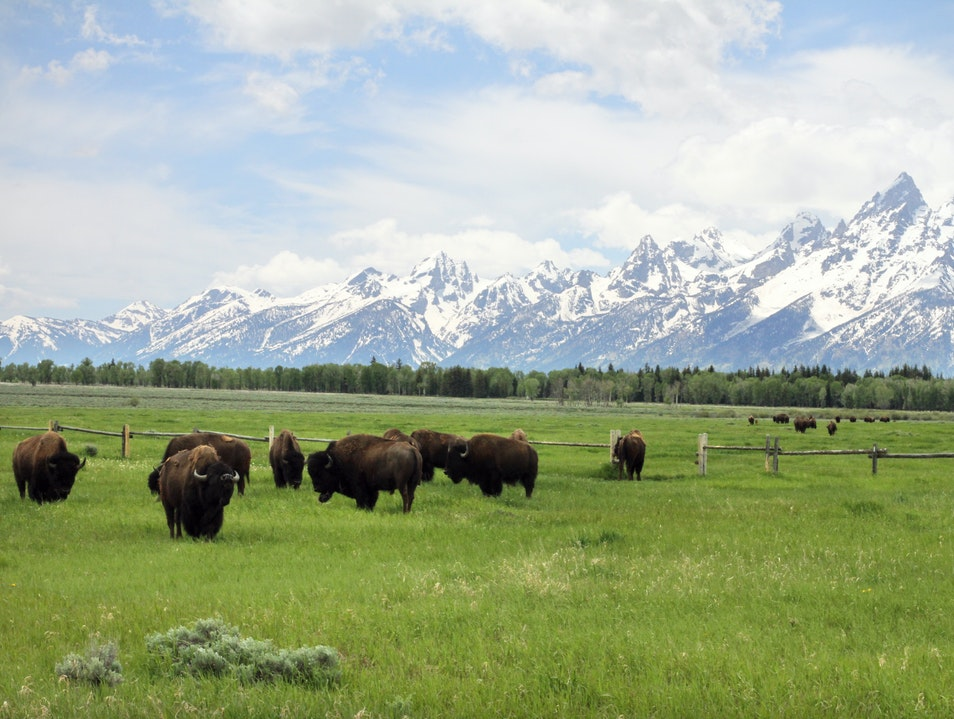 Buffalo Crossing Jackson Wyoming United States