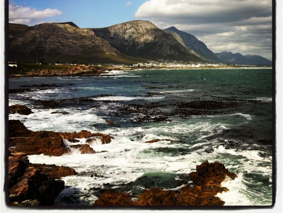 Take it Easy Like The Whales of Hermanus Hermanus  South Africa