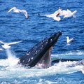 Whale-Watching Tour Bar Harbor Maine United States