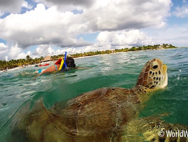Snorkelling with Green Sea Turtles right off the Beach!