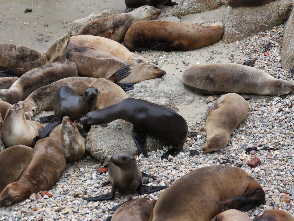 Beach Bums disrupted Monterey California United States