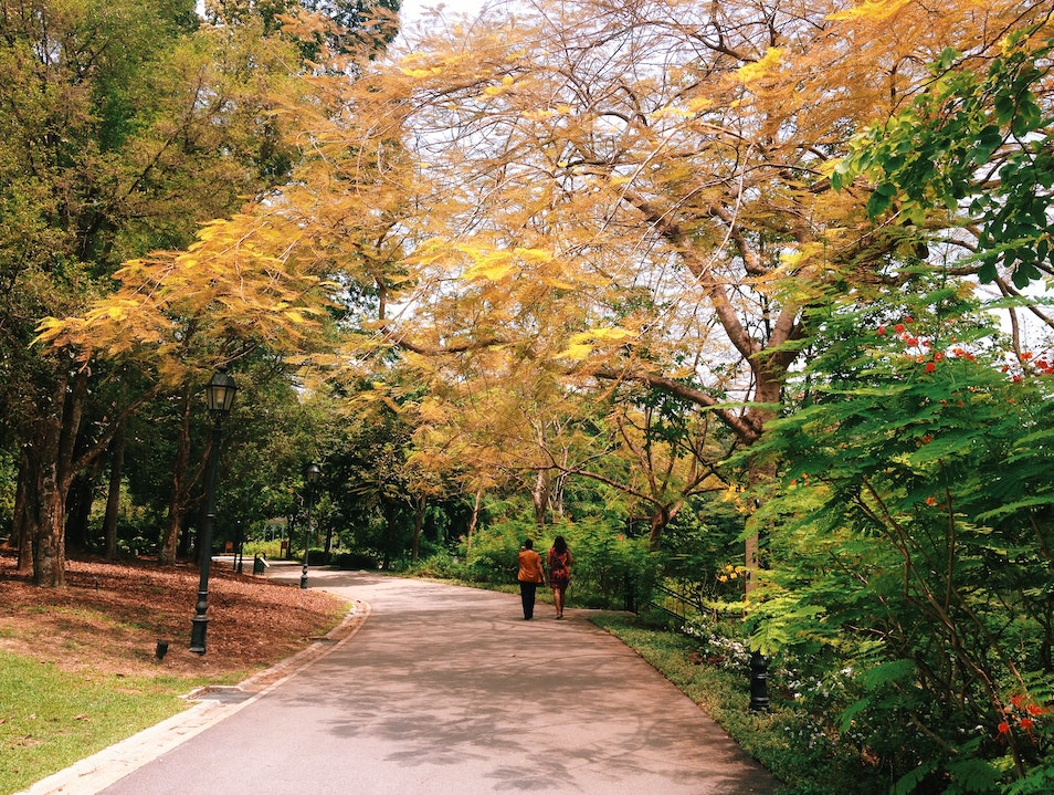 Fall Foliage in Summer Singapore  Singapore