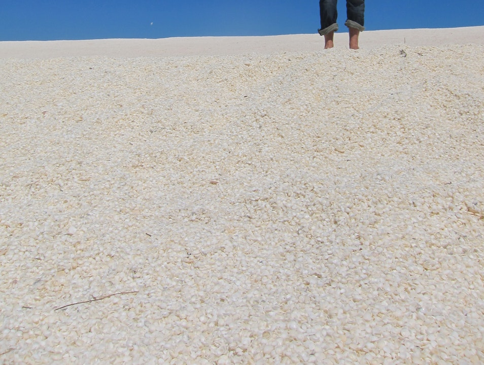 A beach truly made of shells Francois Peron National Park  Australia