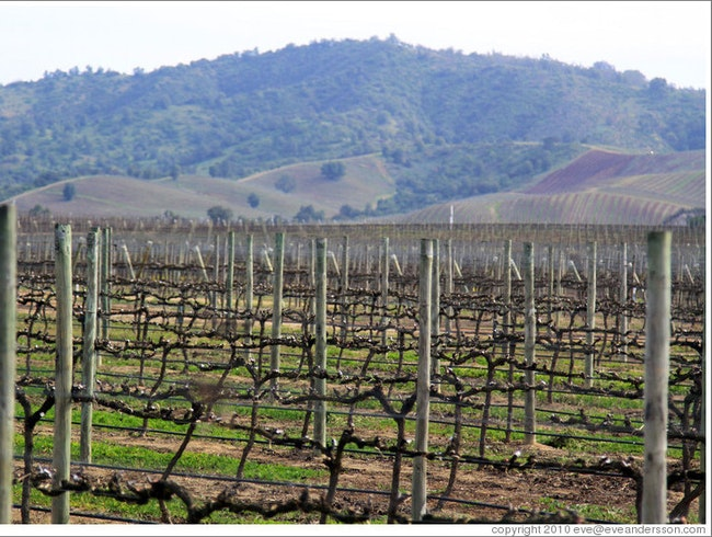 Track Down Terroir in the Casablanca Valley