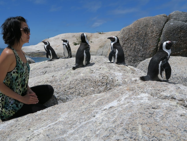 Chill with African Penguins for a day!