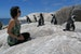 Chill with African Penguins for a day! Cape Town  South Africa
