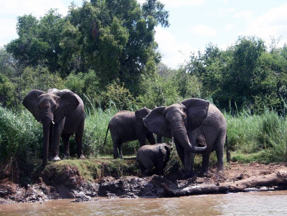 Olifants River Safaris   South Africa